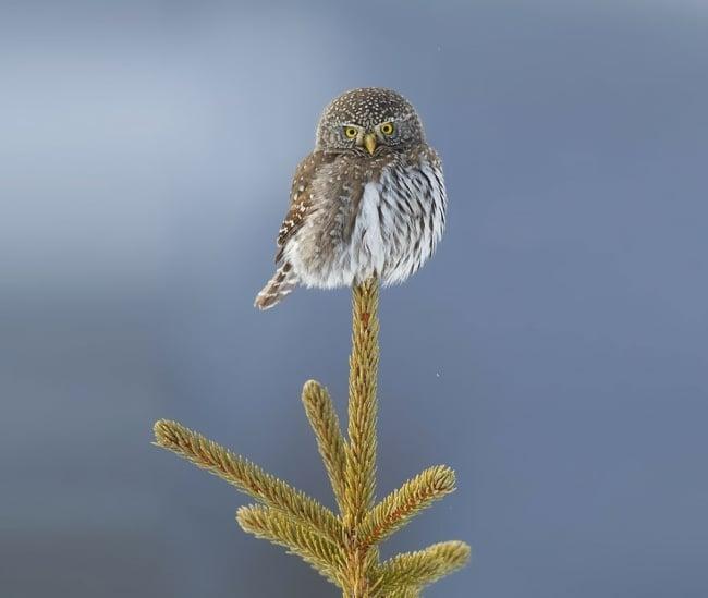 Cute Owl Photos 5