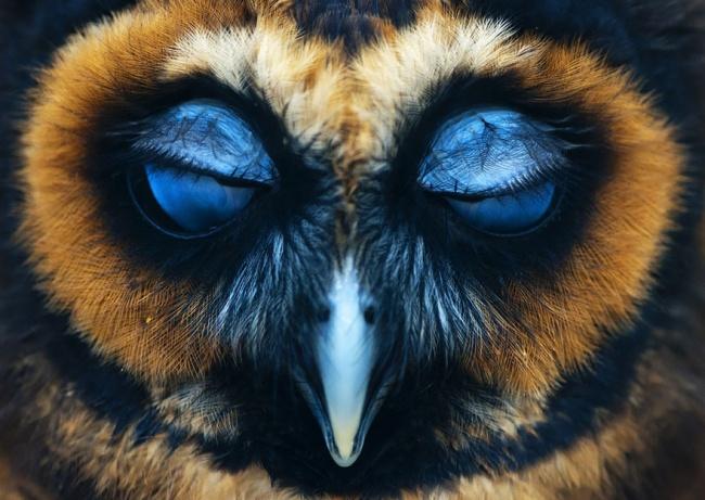 Cute Owl Photos 6