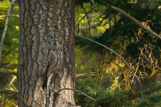 Cute Owl Photos 7