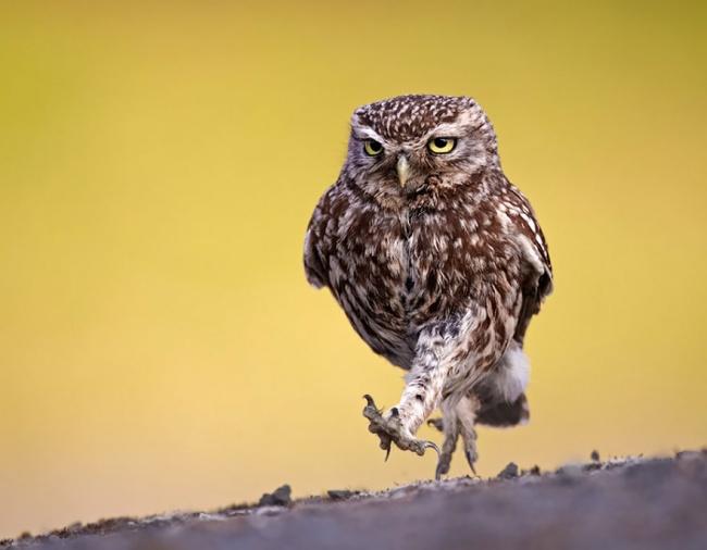Cute Owl Photos 8
