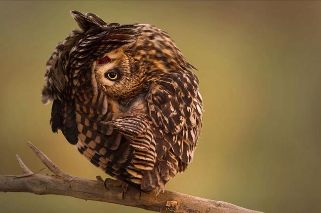 Cute Owl Photos 9