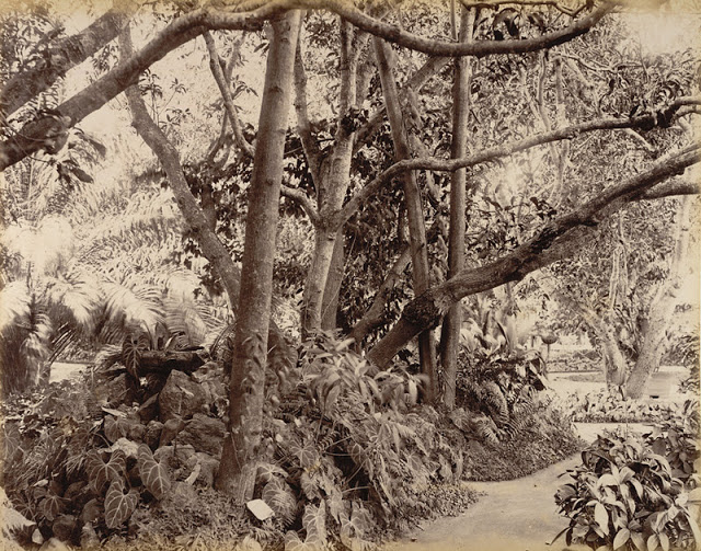 a park in Bangalore 1902