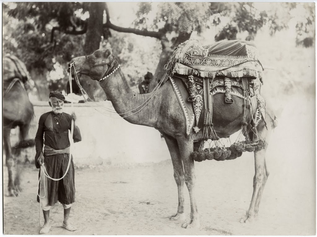 Camel with Attendant - Jaipur, Rajasthan, c1900's