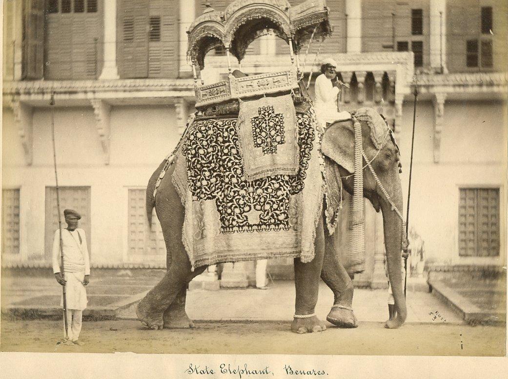 State Elephant Benares