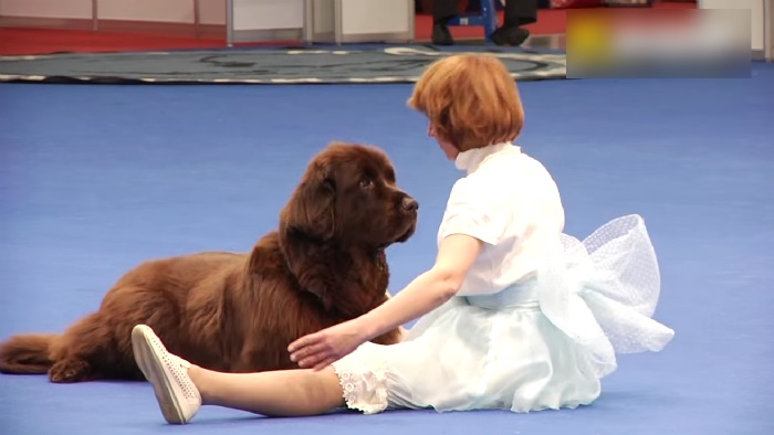 Dancer Dog, russia, moscow, dog, animal, Dog dance, funny, lol, omg, wtf, viral, girl dancing with dog, dancer dog moscow, russian dog show, Eurasia dog show