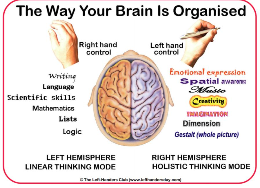 Parts Of The Brain And What They Do While they do work together
