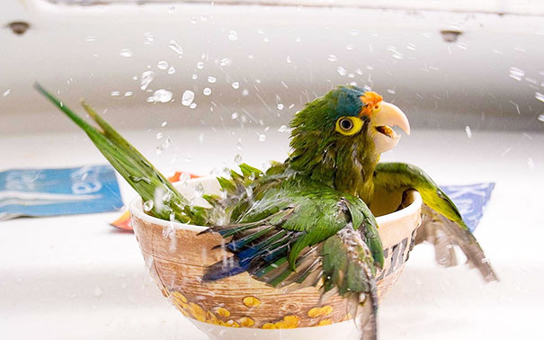 animals, shower, bath, pics, photos, images, pets, cute, lovely, lol, photography, water, funny, fun, sweet, adorable, bird