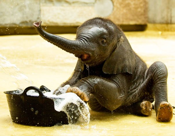 http://www.reckontalk.com/wp-content/uploads/2015/07/11-Bathing-Animals-That-Will-Put-A-Sweet-Smile-On-Your-Face-8.jpg