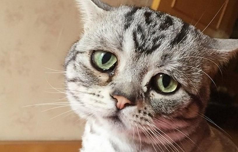 Meet Saddest Cat LUHU, a Tabby by breed | Reckon Talk  Meet Saddest Ca...