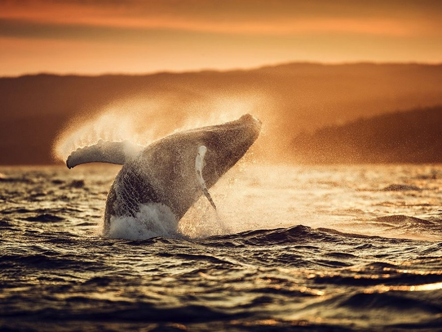 photo, photography, amazing, awesome, cool pics, photo of the month, national geographic, photo of the day, best photo, Picture of the Month