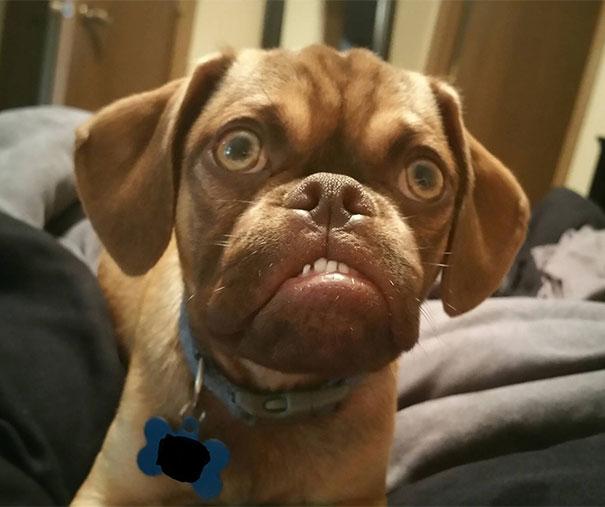 world's grumpiest dog, grumpy dog, grumpy dog meme, grumpy dog breeds, grumpy dog images, grumpy dog reddit, Grumpy Cat, funny dogs, viral, reddit
