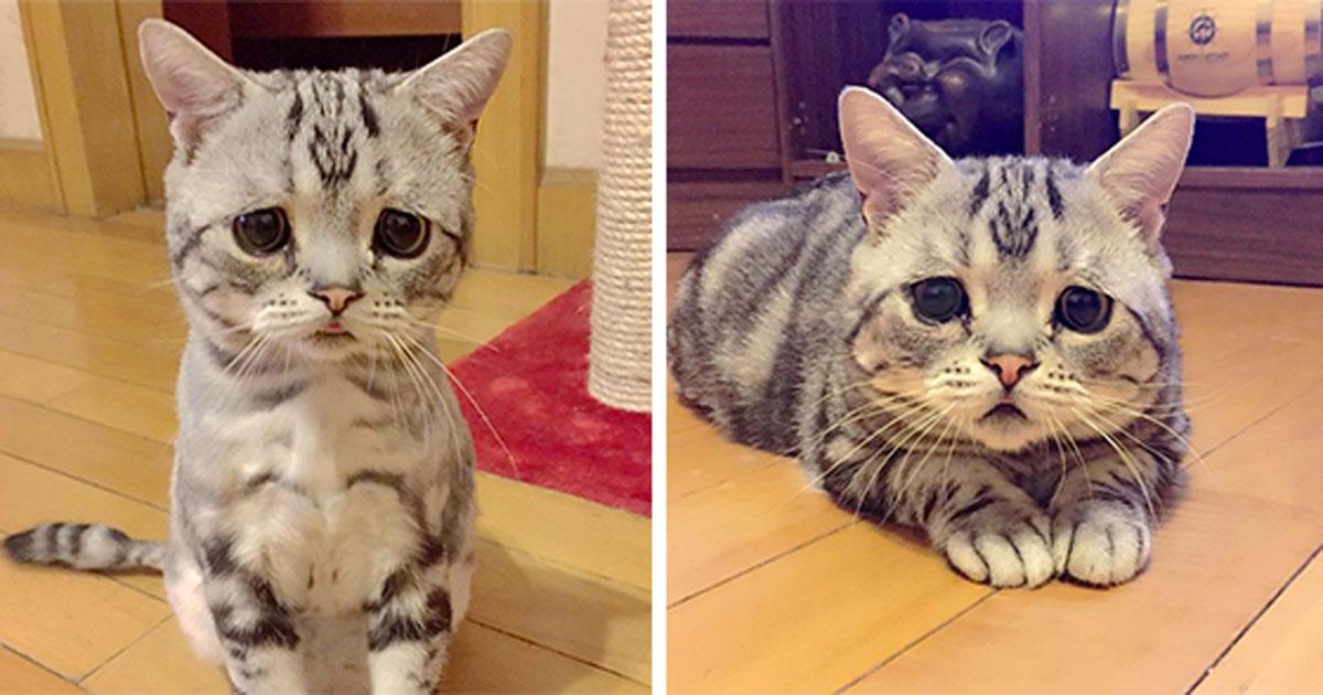Cat, sad cat, saddest cat, china, instagram, viral, LUHU, trending, pets, social media, Saddest Cat on Instagram, Cute Cats, Cats Instagram, China Cats, Social Media Cats, Funny News, Weird Photos, kitty,