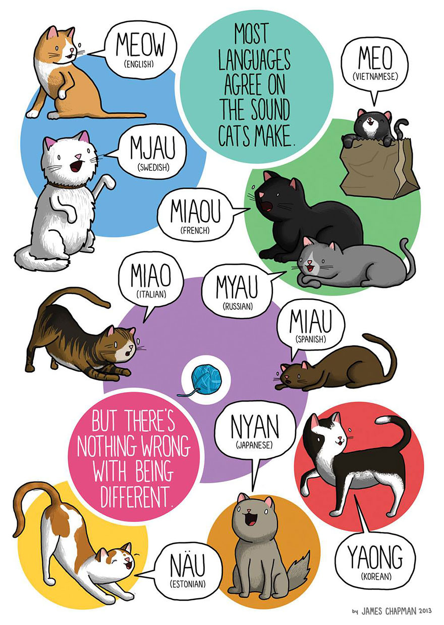 cat meaow in different languages