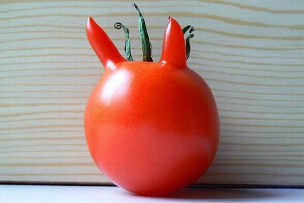 Funny, funny fruits, vegetables, funny plants, photography, lol, creative, awsome, amazing, around the world