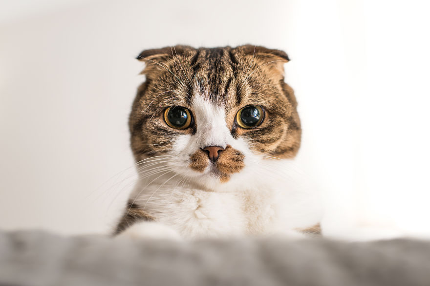 cats, photography, animal. moods, emotions, funny, amazing, awsome, wow, lol, funny, pussy, kitten, attitude