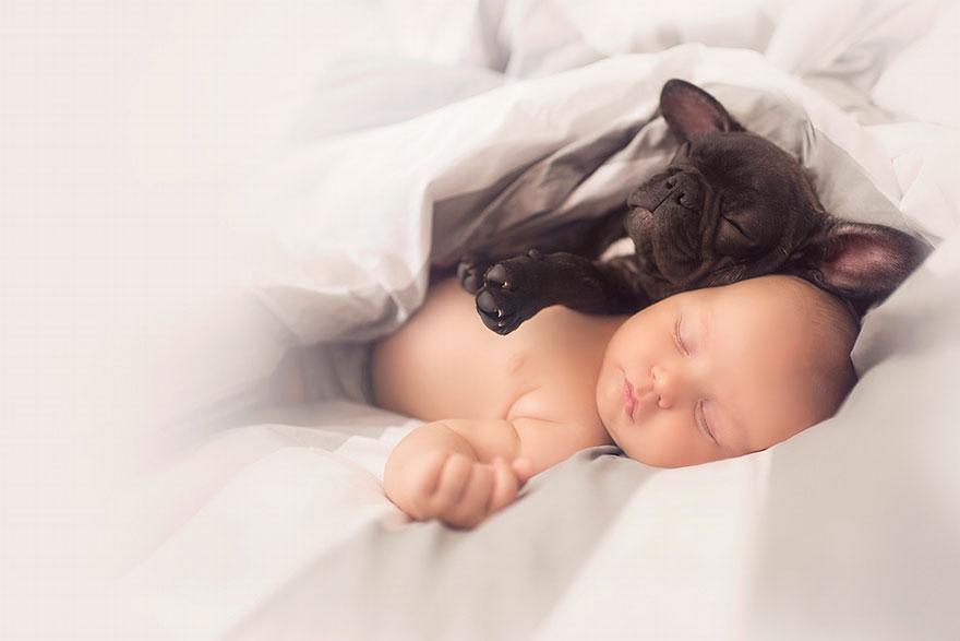 baby, dog, friendship, french bulldog, ivette ivens, kids, bulldog, man, wow, amazing, friend, awsome, french bulldog, puppy, bulldog pup, dilan