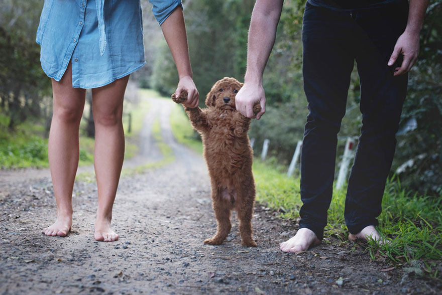 couple, newborn, dog, elisha minnette, photography, Abby Lee, Matt Kay, Australian couple, new mom, new dad, baby, animal, pet, Humphry, Humphry dog, Photoshoot, photographer, idea, creative, creativity, cute dog, family, loving and adorable, groodle