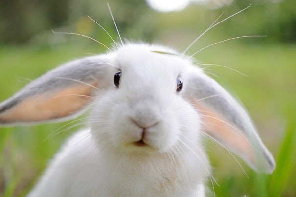 13 Amazing & Cute Pics Of Bunnies | Reckon Talk