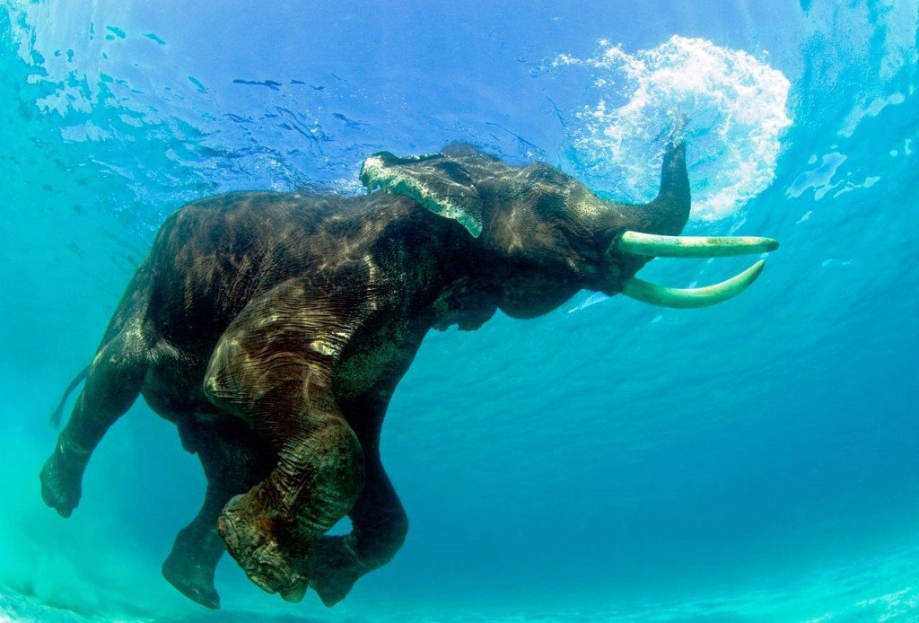 15 Mysterious Facts About Andaman And Nicobar Islands -7205