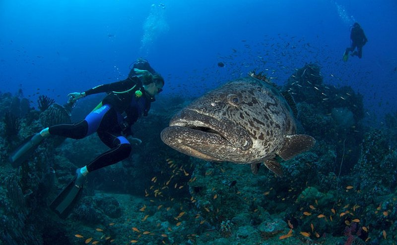 15 mysterious facts about andaman and nicobar islands