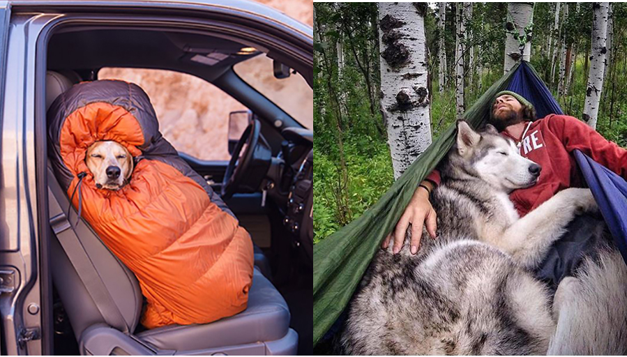 Amazing Photos Of Camping With Dogs