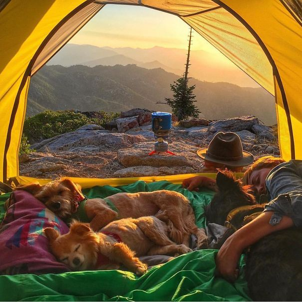 C&ing With Dogs beach c&ing dog first aid kit c&ing taking your dog & Amazing Photos Of Camping With Dogs | Reckon Talk