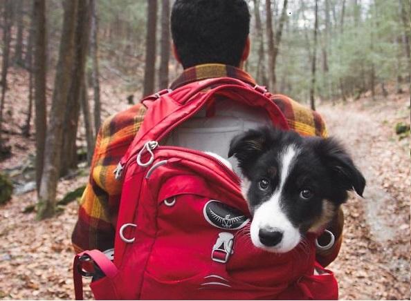 dog tent camping | Reckon Talk