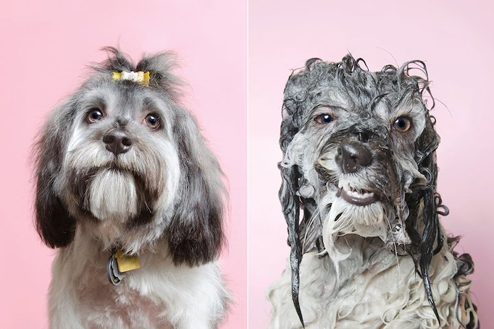 11 Funny Photos Of Wet Dogs Photographed By Sophie Gamand