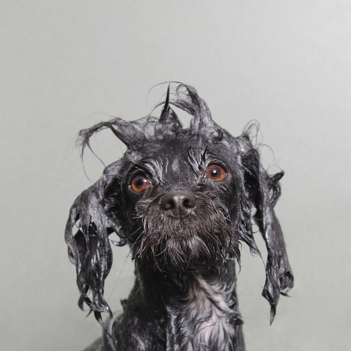 dog, pet, puppy, pitbull, pit bull, animal, wet dog, cute, funny, lol, lolz, wow, amazing, sweet, lovely, beautiful, awesome, French photographer, photography,  Sophie Gamand, portraits, Wet Dog series, book, author, writer, first book, 144-page collection, Adopt-A-Shelter-Dog Month