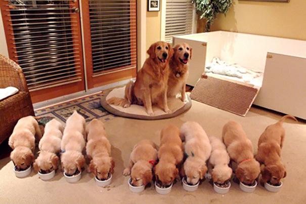 dog, pet, baby, babies, puppy, kids, dog mummy, dog mommy, dog mom, dog parents, animal, photography, photographer, wow, funny, amazing, cute, sweet, lovely, awesome