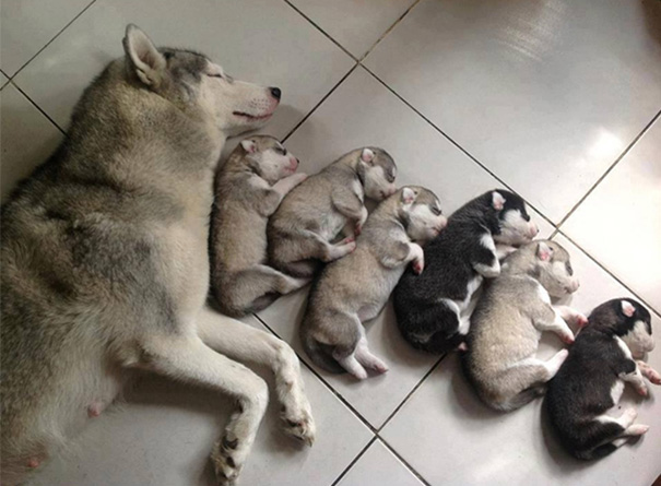 15 Awesome Pics Of Proud Dog Mommies With Their Cute