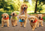 15 Awesome Pics Of Proud Dog Mommies With Their Cute Babies
