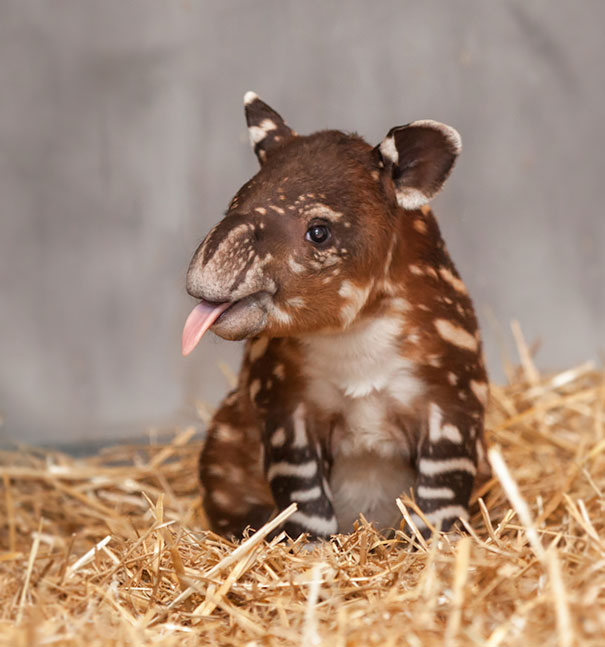 baby animal, pet, cute, adorable, tiny animal, puppy, cub, lovely, sweet, wow, amazing, great, funny, lolz, small pet