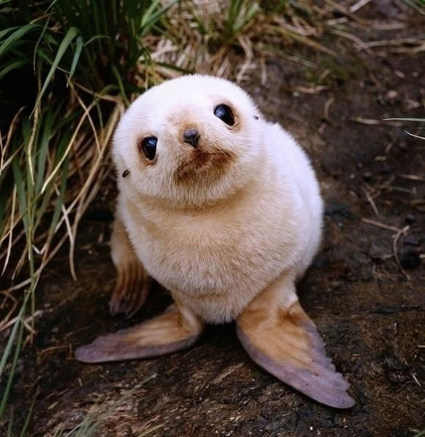 baby animal, pet, cute, adorable, tiny animal, puppy, cub, lovely, sweet, wow, amazing, great, funny, lolz, small petc