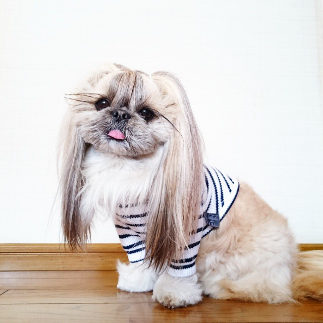 Meet This Derpy Dog | Has The Most Fabulous Hair | Instagram