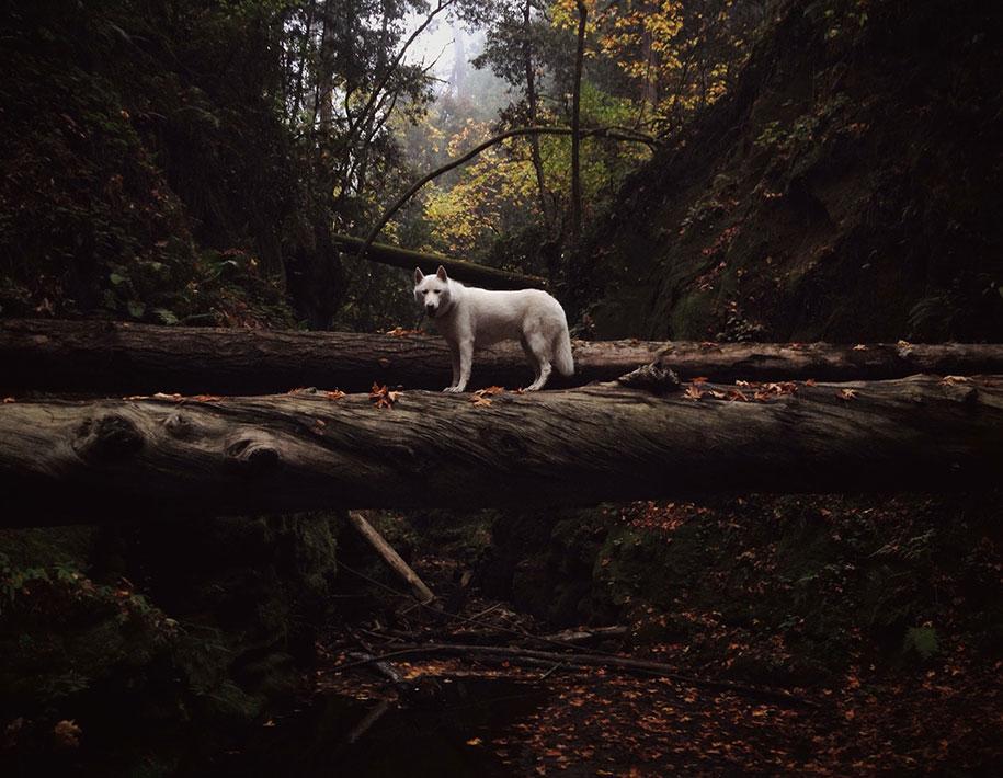 animal, america, animal photography, California, dog, John Stortz, nature photography, pet, pet dog, pet photography, travel photography, U.S., U.S.A, USA, Utah, West, Wolf, Wolfgang, wolf dog, adventures, travel, photography, photographer, instagram, tumblr, social media, best buddy, bond