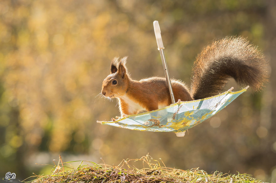 shoot wild red squirrel squirrels nature animal photography funny