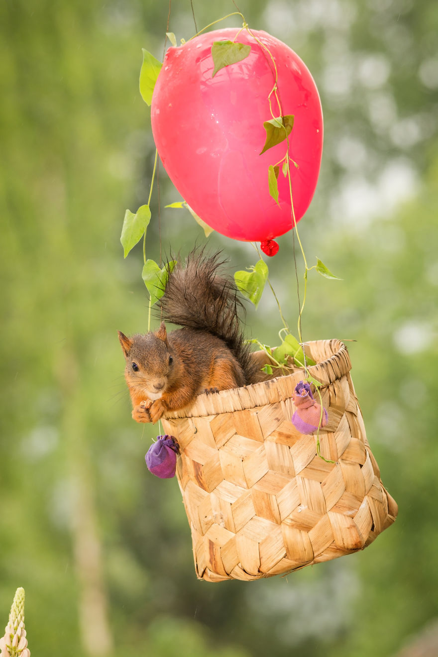 Cute Pics of Playing Wild Red Squirrel  #No. 4 Is Just Awesome (11)