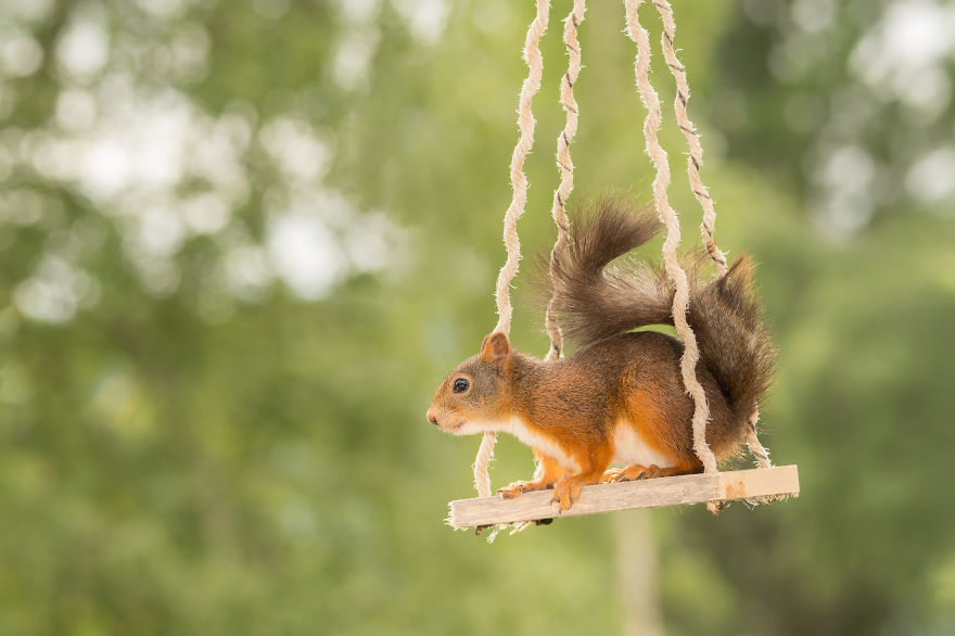 Cute Pics of Playing Wild Red Squirrel  #No. 4 Is Just Awesome (12)