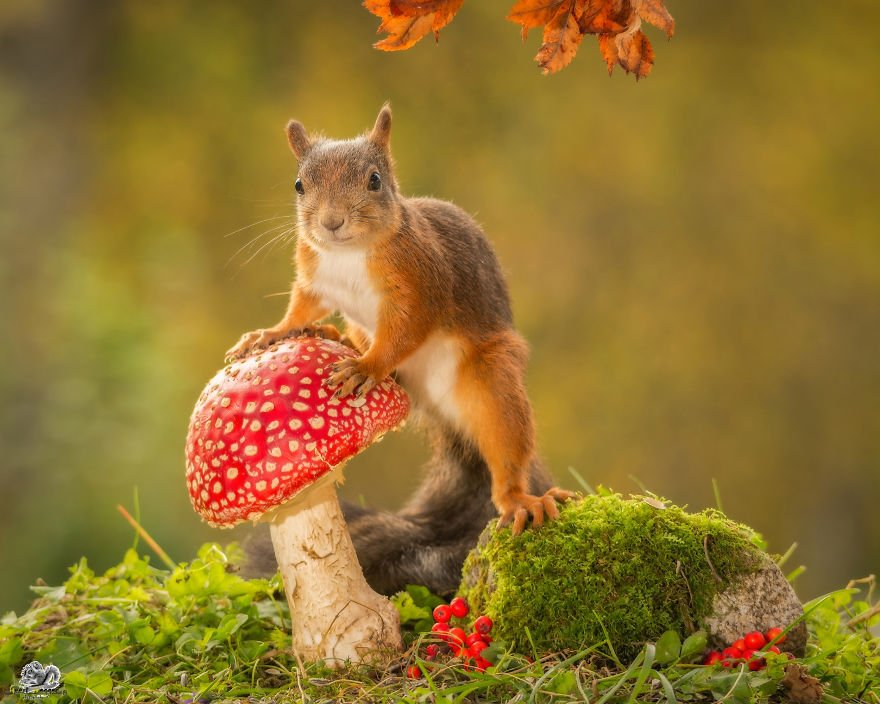 Cute Pics of Playing Wild Red Squirrel  #No. 4 Is Just Awesome (14)