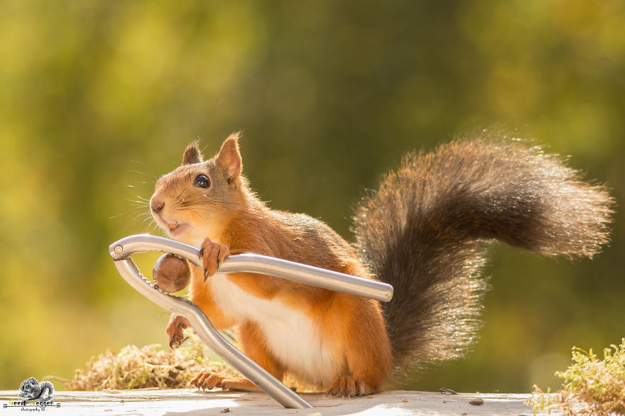 Cute Pics of Playing Wild Red Squirrel  #No. 4 Is Just Awesome (15)