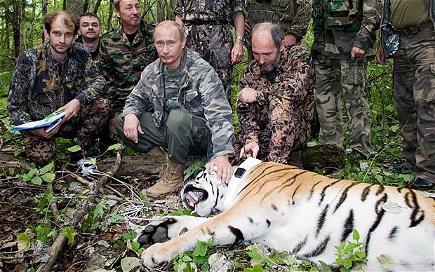 Vladimir-Putin-Tiger-Rescue