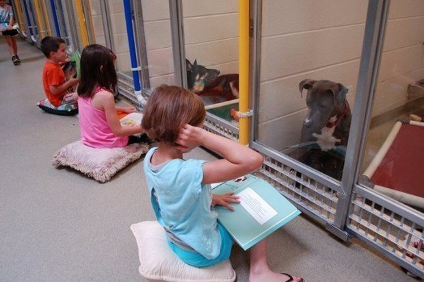 animal shelter, dogs, animal lovers, photo, cute, aww, missouri, animal with kids, dog with child, united state of america