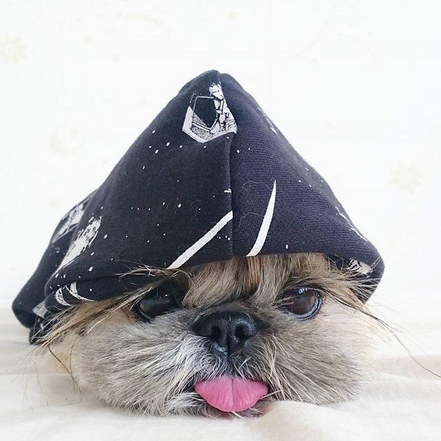 15 Cutest Photo Of Japanese Hairstyle Dog Quot Kuma Quot Instagram