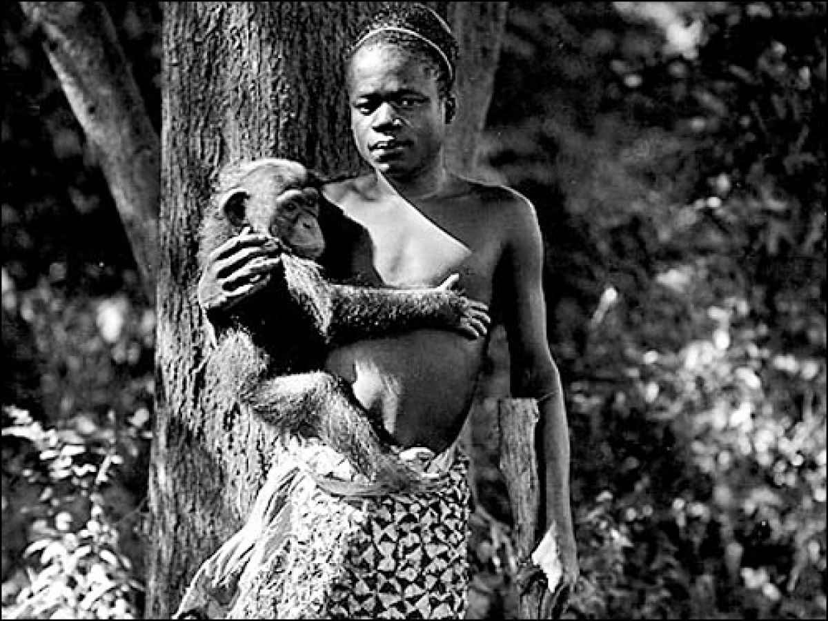 Фото с неграми обезьянами 16 фотография