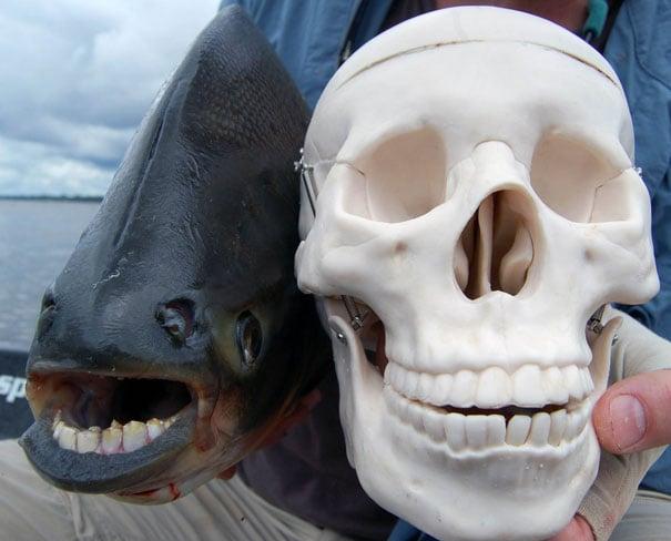 animal, unusual animals, weird, less known animal, less famous animal, endangered animals, strange animals, sea creatures