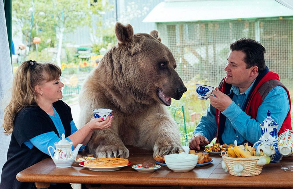 russia, russian, amazing, animal, bear, pet bear, adoption bears, wtf, omg, moscow