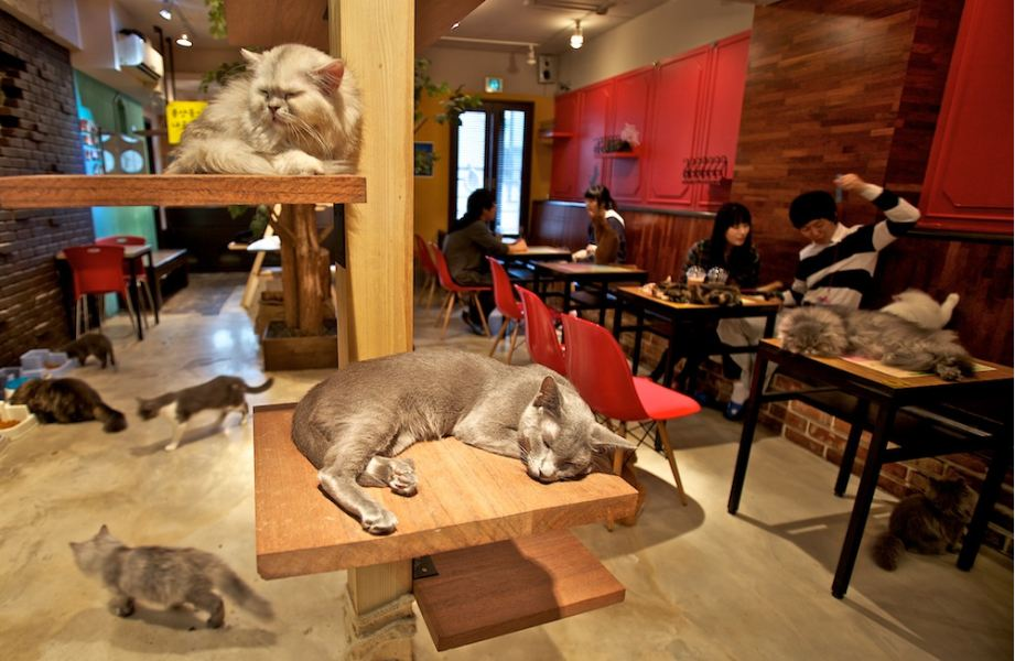 japan, cat cafés tokyo, cat cafe, trend, japanese, animal, cat, cat lover, cat cafes address, asia, kitty cat cafe