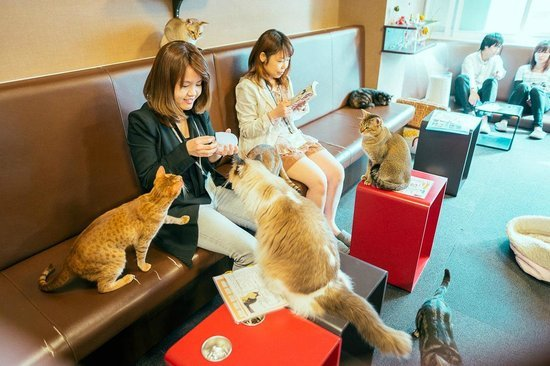 Cat Cafe Address