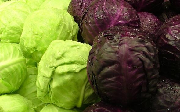 patta gobhi , patta gobhi ke fayde,benefits of cabbage , benefits,cabbage health benefits,health facts,cabbage benefit for health,health,health benefits, cabbage health benefits, cabbage benefits